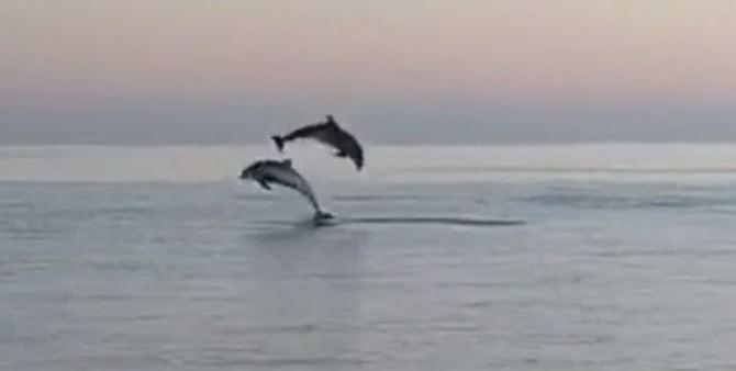 I delfini avvistati a Corigliano Rossano