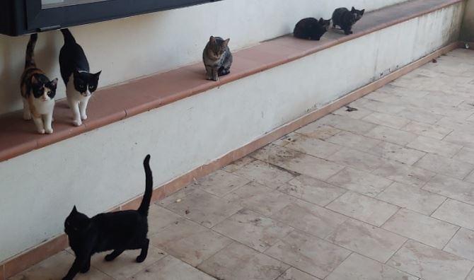 I sette gatti liberati a Rossano
