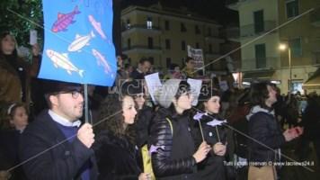 Sardine in piazza - Repertorio
