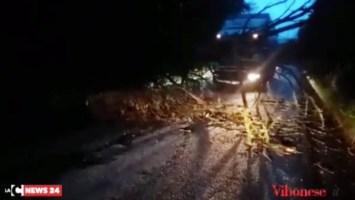Albero crollato su strada a Limbadi