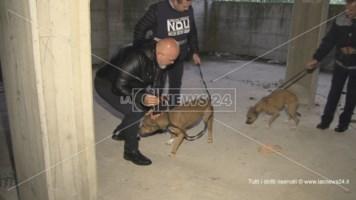 Legati, denutriti e maltrattati: salvati due cani dal Nucleo decoro urbano