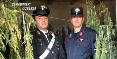 Laboratorio artigianale di marijuana, arrestati padre e figlio a Bonifati
