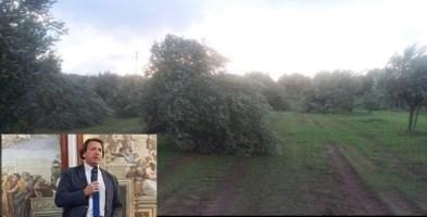 Maltempo nel Lametino, danni per gli olivicoltori: «La Regione intervenga»