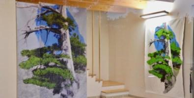 Diventa arte il pino più antico d'Europa immerso nel Pollino
