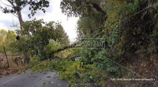 Albero caduto lungo la carreggiata tra Cosenza e Mendicino