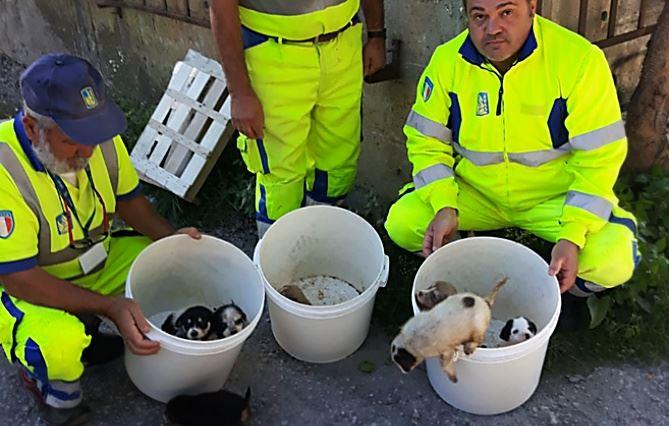 Cuccioli salvati a Pizzo