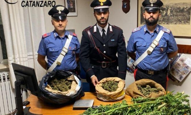 Marijuana sequestrata nel Catanzarese