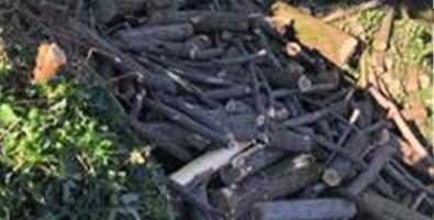 Beccato a rubare legna in una proprietà privata, arrestato