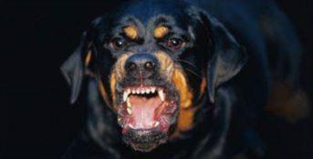 Bimbo di otto mesi muore azzannato dal cane di famiglia, tragedia in Puglia