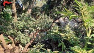 Le piante rinvenute in località Rocce dell'Agonia