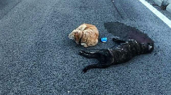Il cane ucciso sulla strada a Sassari e il compagno