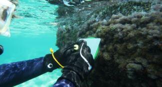 Il raro mollusco scoperto nel mare cosentino