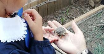 """""""La tartaruga va a scuola"""", nati tre esemplari in un istituto di Cosenza"""