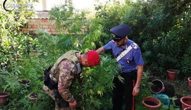 Marijuana rinvenuta nel Reggino
