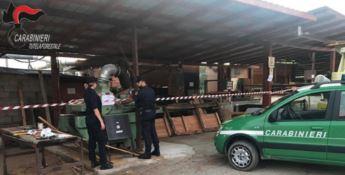 Sequestrata segheria abusiva nel Cosentino, denunciato il proprietario