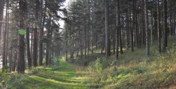 Un bosco a Lorica