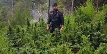San Luca, scoperte 32 piante di canapa indiana. Arrestato 55enne