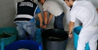 Porto di Crotone, sequestrati 700 kg di prodotto ittico