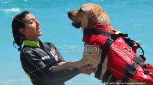 Dopo un'estate intensa i cani bagnini tornano sui campi di addestramento