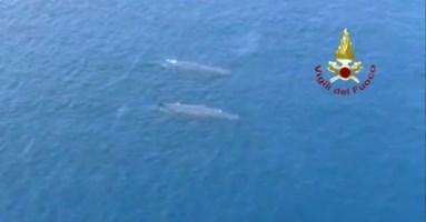Le balene solcano lo Stretto di Messina: la natura si riprende i suoi spazi