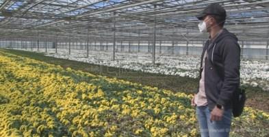 Miliardi di fiori e piante al macero, per il settore è crisi senza precedenti