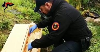 Esplosivo ad alto potenziale, un fucile e munizioni sequestrati nella Locride
