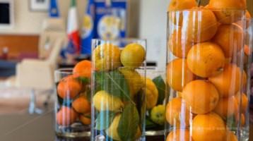 Jole Santelli, non fiori ma solo frutti della Calabria nel suo ufficio alla Regione