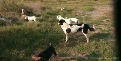 Lamezia, cani avvelenati con lumachicida: la denuncia dell'Oipa