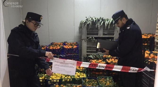Sequestro frutta e verdura a Montalto