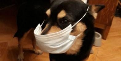 Borrelli (Prociv): «Non abbandonate i cani, non diffondono il coronavirus»