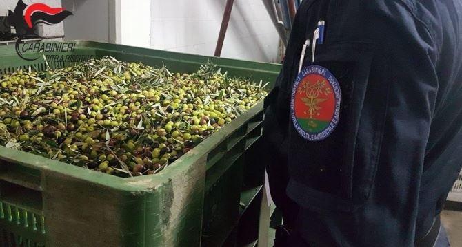Olive in un frantoio