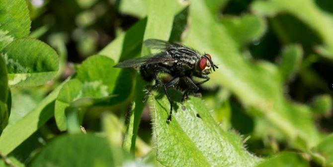 Alcune mosche fotografate nel Parco Aspromonte