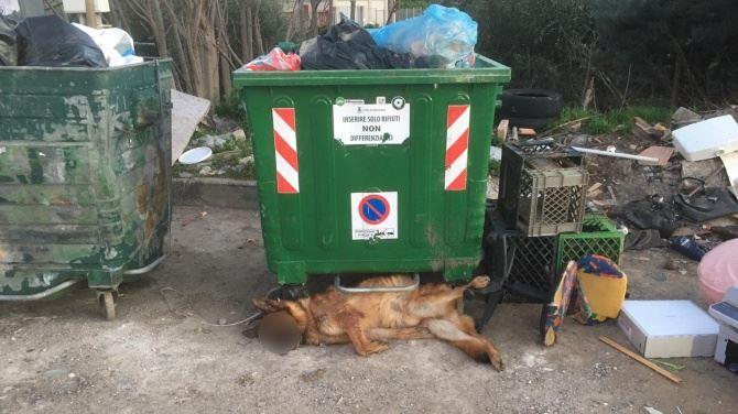 Cane morto gettato tra i rifiuti