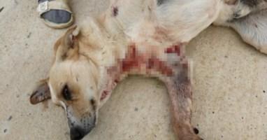 Lamezia, cane ferito da cacciatore rischia l'amputazione di una zampa