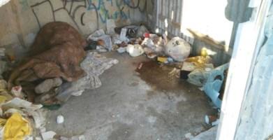 Un uomo dorme tra i rifiuti - Repertorio