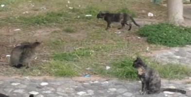 Alcuni gatti a Lamezia