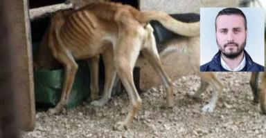 Randagismo a Lamezia, Gianturco (Fdi): «Comune ricorra al fondo prevenzione»