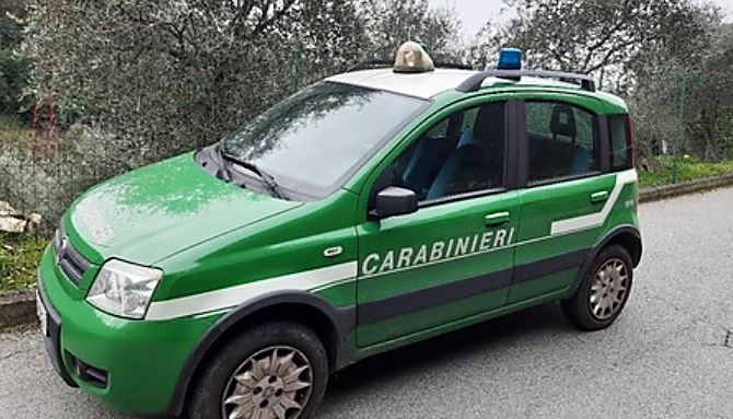 Carabinieri forestale (foto ansa)