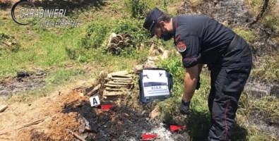 Bosco in fiamme a Rota Greca, denunciato il responsabile