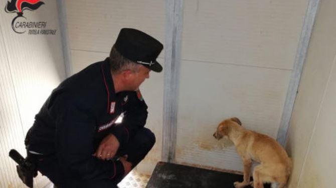 Il cucciolo soccorso a Trebisacce