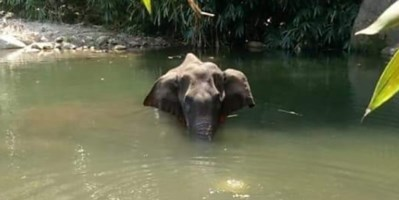 Elefante incinta uccisa in India (foto Kerala Forest Department)