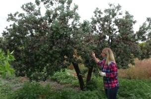 Locride, il ritorno all'agricoltura per sfidare la crisi: «Lavoro la terra e sono felice»