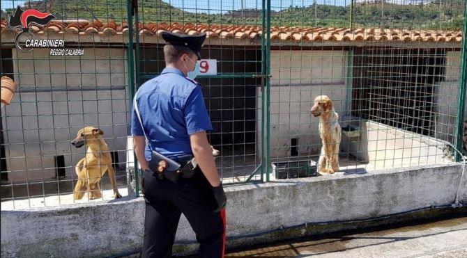 Il canile sequestrato a Sant'Ilario nel Reggino