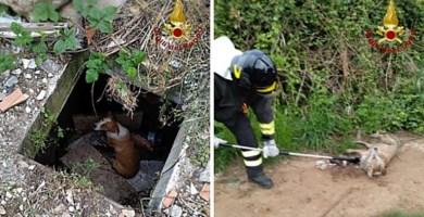 Il cane recuperato a Vibo Valentia