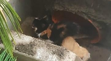 I gatti salvati a Taverna