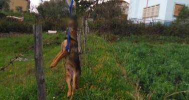 Cane impiccato a Cassano, nel Cosentino