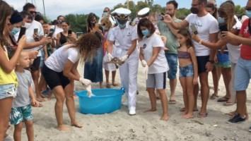 Roccella: aveva ingerito plastica, curata e rimessa in libertà la tartaruga Camilla