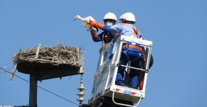 Le operazioni per inanellare i pulli di cicogna, foto Lipu Rende