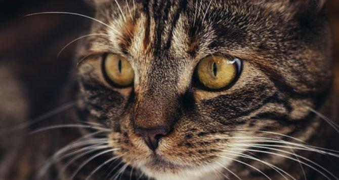Gatto, immagine di repertorio da pixabay
