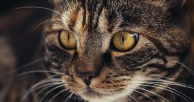 Orrore a Livorno, 21enne uccide un gatto e lo cucina in strada